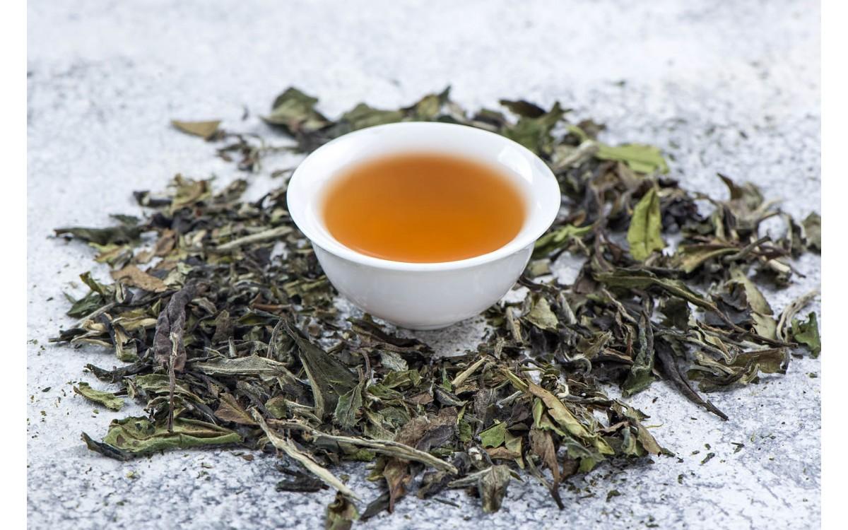WHITE TEA EXPOSED